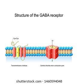 Structure of the GABA receptor. Central chloride anion conduction pore and Transmembrane α-helices