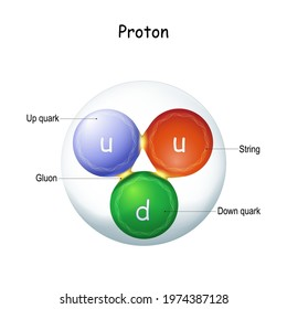 """Structure of a gluon. elementary particle that """"glue"""" quarks together, forming hadrons: protons and neutrons. gauge boson. nuclear physics. quantum field theory. Vector illustration for science use"""