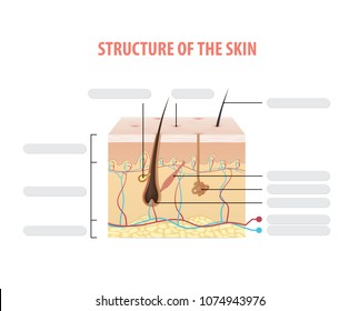 Structure of the skin info blank illustration vector on white background. Beauty concept.