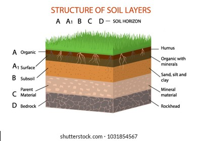 Structure of soil layers diagram vector illustration