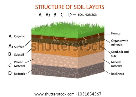 Structure Soil Layers    Diagram    Vector    Illustration    Stock