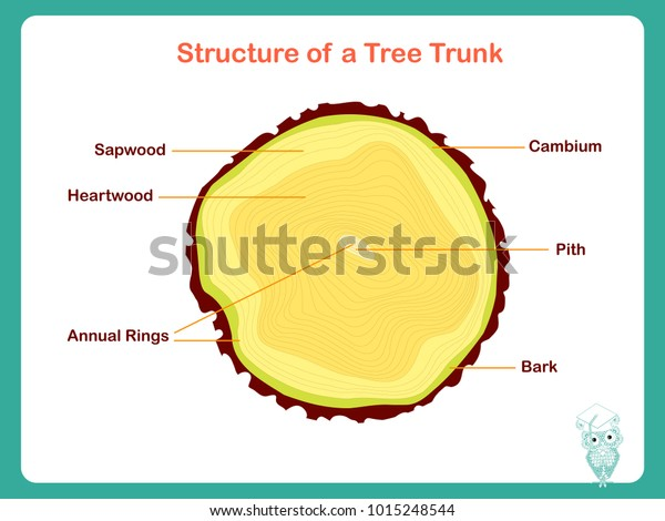 structure of a tree trunk  colorful illustration on white stock vector for  education