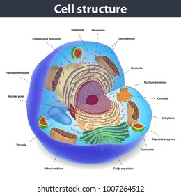 Structuree of human cells, vector illustration