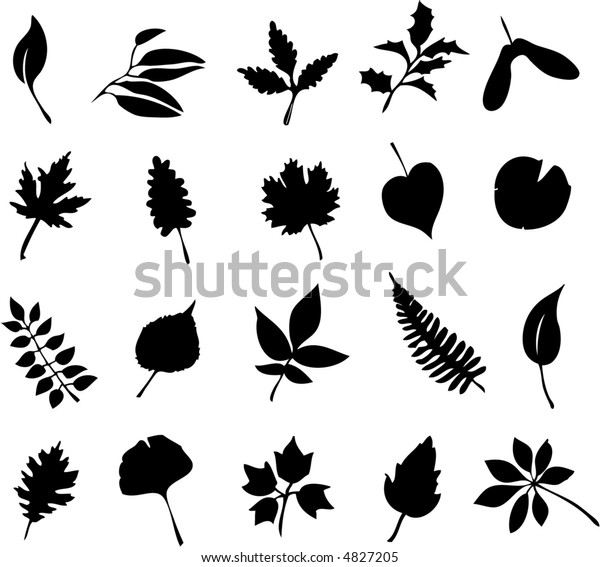 Study Leaves Including Maple Oak Fern Stock Vector (Royalty Free