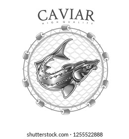 Sturgeon fish into round net engraving style. Logo for fish or caviar on white