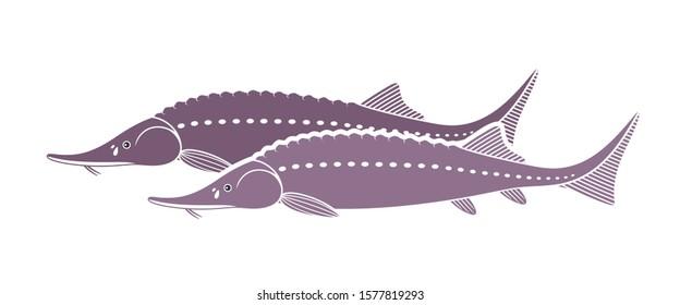 Sturgeon logo. Isolated sturgeon on white background