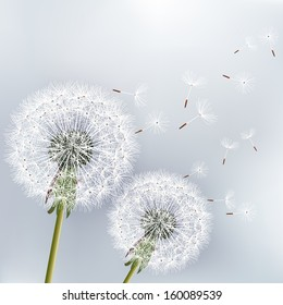Stylish floral background with two flowers dandelions. Beautiful nature background vector. Trendy gray background. Vector illustration