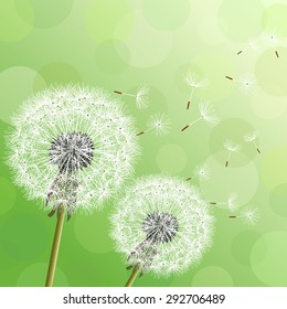 Stylish Modern Nature Background With Two Flowers Dandelions And Flying Fluff Trendy Floral Green