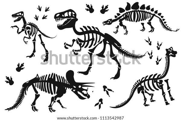 Стильный силуэт скелетов динозавров, костей динозавров. Трицератопс, Тираннозавр, Брахиозавр, Велоцираптор, Стегозавр, Парасавролоф. Современный векторный плоский дизайн изображения изолированы на белом фоне