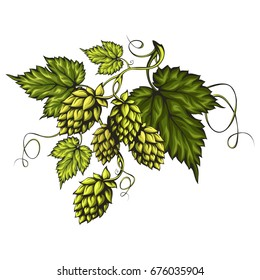 Stylized beer hops cones with green leaves on a branch isolated on white background. Suitable for beer labels and packaging.