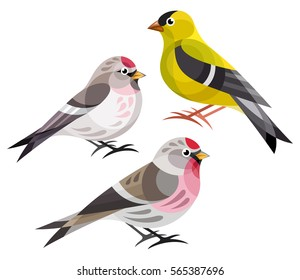 Stylized Birds - Finches - American Goldfinch, Hoary Redpoll, Common Redpoll