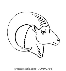 Stylized black and white drawing of a mouflon. Vector illustration isolated on white. Wild male sheep. Hand drawn picture, side view of an animal, linear drawing