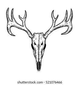 stylized Deer Skull sketch hand drawn original illustration. design for clothing print, postcards, cards, cover, tattoo design bohemian boho outline style. isolated on white background.