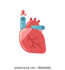 Stylized human heart anatomy icon. Modern flat cartoon style, bright and cute. Isolated vector illustration.