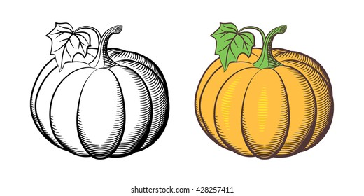 Stylized illustration of pumpkins. Outline and colored version. Isolated on white