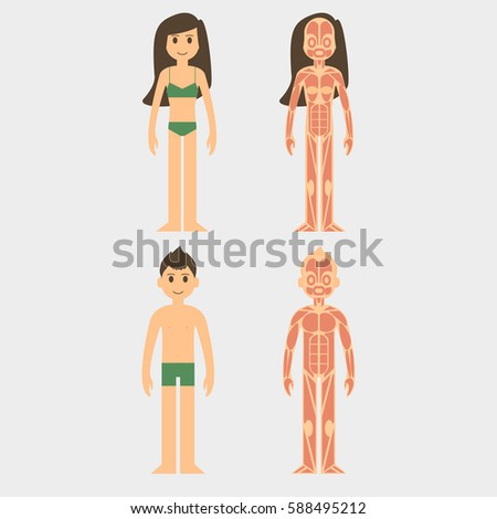 Stylized Male Female Body Anatomy Chart Stock Vector Royalty Free