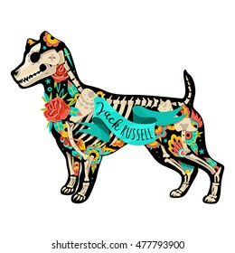 Stylized skeleton Jack Russell Terrier. Jack Russell Terrier. Vector illustration