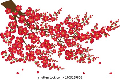 Stylized vector of Japanese quince (Chaenomeles japonica) flowers on branch