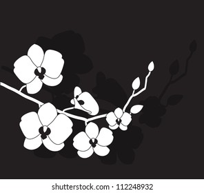 stylized white orchid on a black background