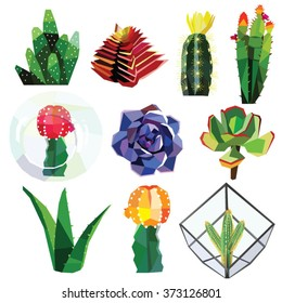 succulent cactus flower low poly colorful set with glass geometric terrariums. Vector illustration isolated on white background.