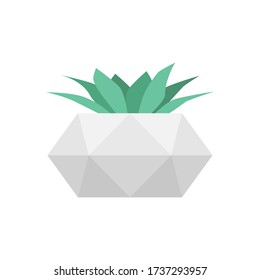 Succulent in concrete geometric pot. Vector isolated trendy flower. Home gardening