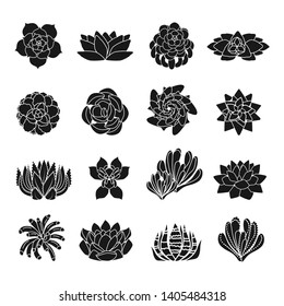 Succulent desert flowers icons set. Simple illustration of succulent desert flowers vector icons for web design on white background