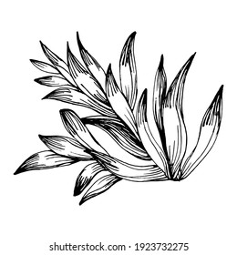Succulent flower. Floral plants botanical cactus. Isolated illustration element. Vector hand drawing wildflower for background, texture, wrapper pattern, frame or border.