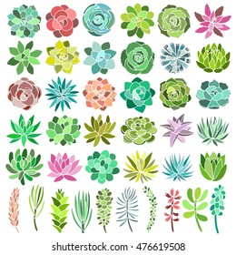 Succulent plant set isolated on white background. Vector illustration