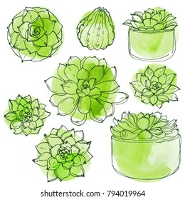 Succulents. Cacti line drawn on a white background. Flowers in the desert. Vektoryny drawing succulents.