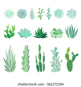 succulents and cactus, vector floral illustration