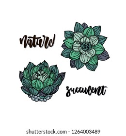 Succulents. Flat hand drawn vector card with handwritten lettering  - succulent, nature. Sketch plant. Isolated cartoon illustration.