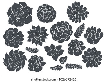 Succulents. Vector set of different silhouettes succulents . Elements for design.