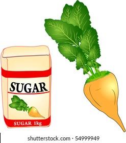 Sugar beet - vector