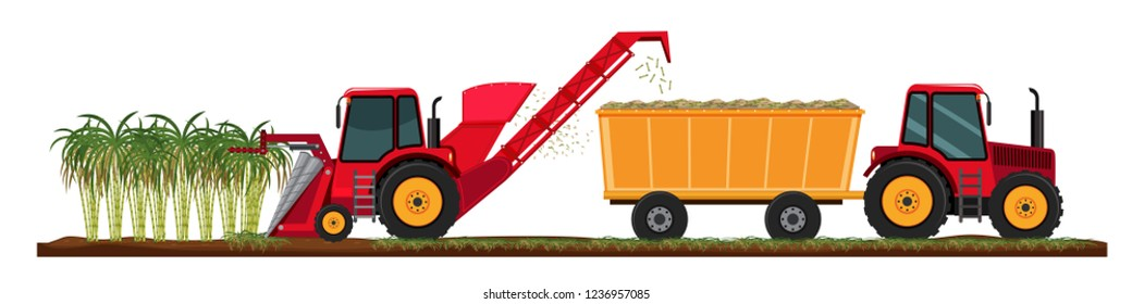 Sugar cane farming harvest illustration