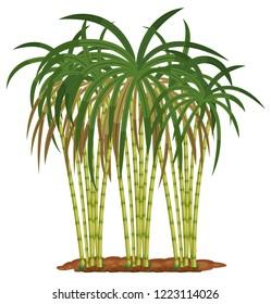 Sugar cane plant on white background illustration