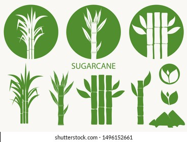Sugar cane set. Cane plant, sugarcane harvest stalk, plant and leaves, sugar ingredient stem. Vector