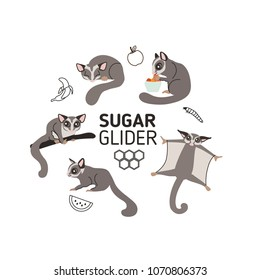 Sugar gliders in different poses and sugar glider's food. Set of vector illustrations and icons in flat style. Isolated on white background.