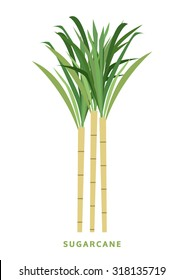 sugarcane, cane vector illustration, isolated symbol on white background