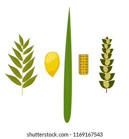 Sukkot. Concept of Judaic holiday. Traditional symbols - Etrog, lulav, hadas arava