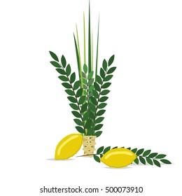 Sukkot Jewish holiday. Jewish torah with Lulav date palm, Etrog citron, Arava willow and Hadas myrtle Jewish festival Sukkot species lulav. Palm branch, willow and myrtle leaves, etrog.