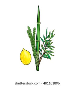 Sukkot. Jewish traditional four species for Jewish Holiday Sukkot. Vector. Happy Sukkot background. Jewish traditional four species lulav, etrog for Jewish Holiday Succot. Sukkah. Rosh Hashana. Paint