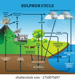 Sulphur cycle vector illustration. Labeled geological earth elements scheme. Diagram with circulation from atmosphere, to depostition, sediment and sulfates. Environmental process explanation graphic.