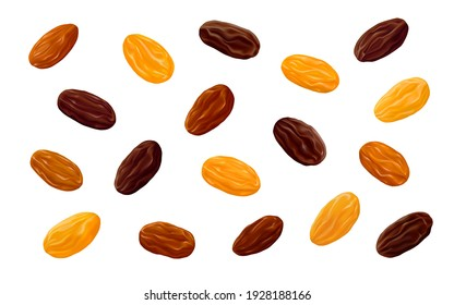 Sultanas, Golden and brown Thompson raisins isolated on white background. Realistic vector illustration.