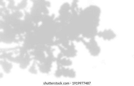 Summer background of plant shadows. Shadow of oak leaves on a white wall. White and black to overlay a photo or mock up. Vector