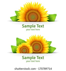 Summer banner, floral background, floral icon or postcard template with yellow flowers of sunflower and green leaves