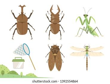 Summer bugs vector illustration set / beetle, stag beetle, Mantis ,cicada , dragonfly