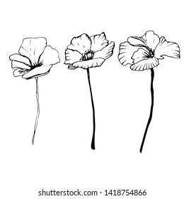 Summer floral set with poppies, flowers, leaves, buds in different angles. Hand drawing ink. Stylish model on an isolated background. Images for blog, decoration. Design for wallpaper, textiles