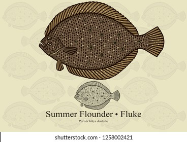 Summer Flounder, Fluke. Vector illustration with refined details and optimized stroke that allows the image to be used in small sizes (in packaging design, decoration, educational graphics, etc.)