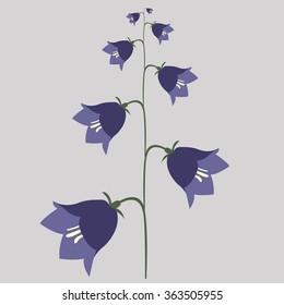summer flowering plants flower bell