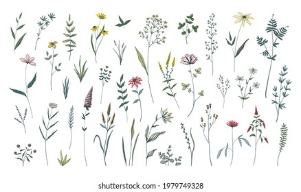 Summer flowers. Hand drawn field blooming herbs. Green stems with leaves and blossoms. Decorative floral elements set. Botanical herbarium. Cute spring plants. Vector wild meadow flora